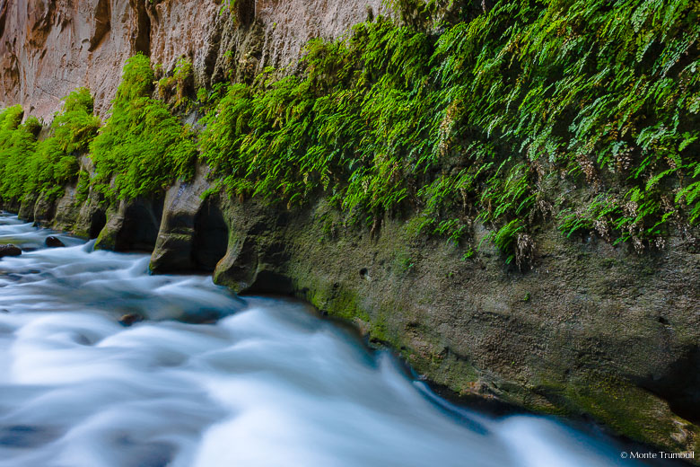 The North Fork of the Virgin River flows past a rock wall covered with vibrant green foliage in the Narrows in Zion National Park.