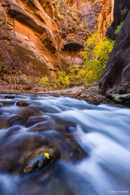 The North Fork of the Virgin River flows around a bend highlighted by golden cottonwood trees and a glowing red wall in the Narrows of Zion National Park in Utah.