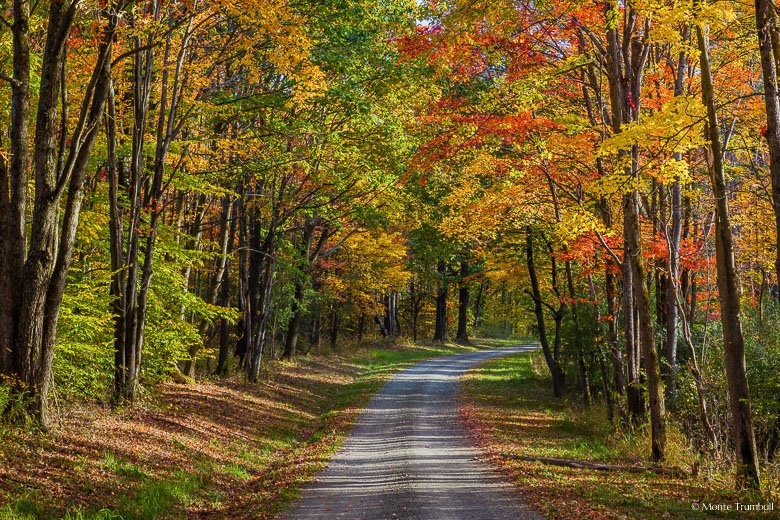 A narrow gravel road passes through a kaleidoscopic grove of maple trees in the Sugar Hill State Forest outside of Watkins Glen, New York.