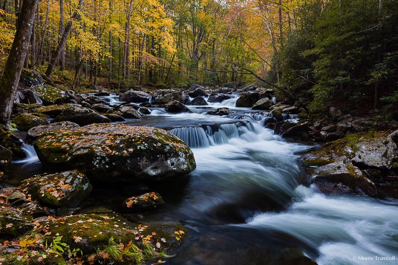 The Middle Prong of the Little River flows through a golden forest and tumbles around a bend in the Tennessee side of Great Smoky Mountain National Park.