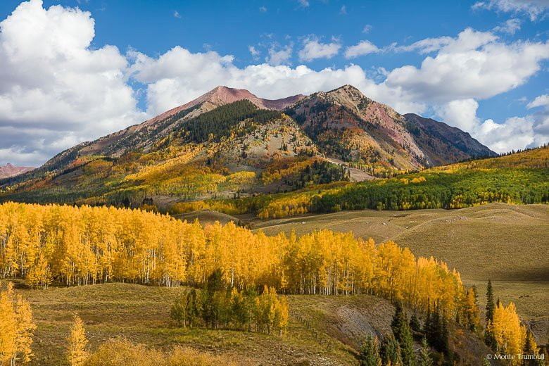 Golden aspen trees line a ridge with Avery Peak looming in the distance outside of Gothic, Colorado.