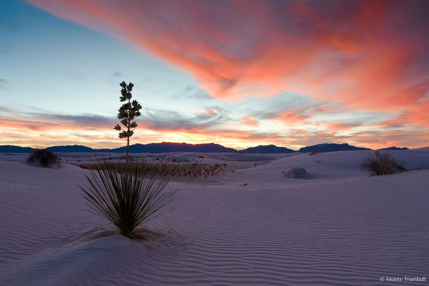 MT-20090108-172718-0036-New-Mexico-White-Sands-National-Monument-yucca-sunset-pink-skies.jpg