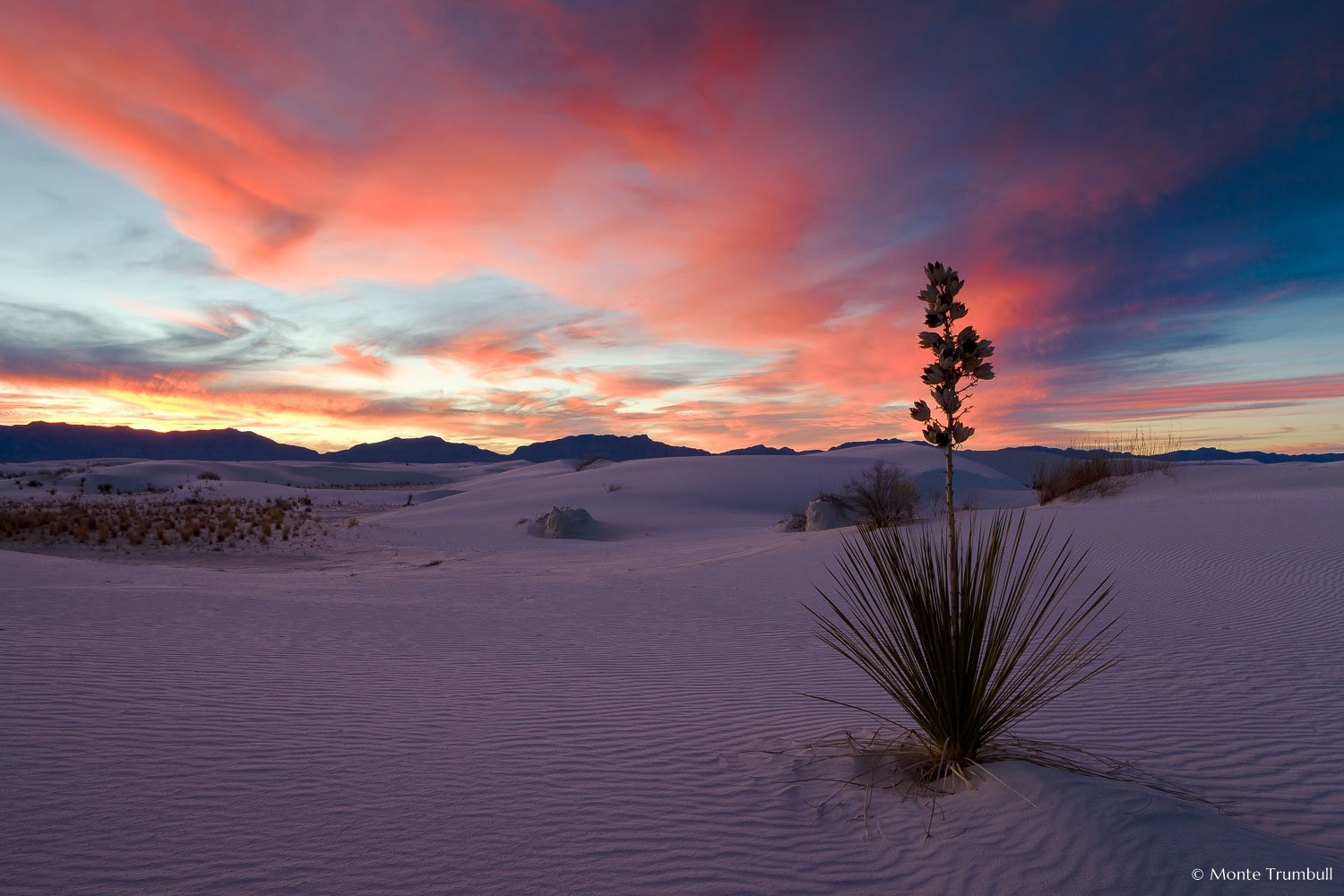 MT-20090108-172756-0037-New-Mexico-White-Sands-National-Monument-yucca-sunset-pink-skies.jpg