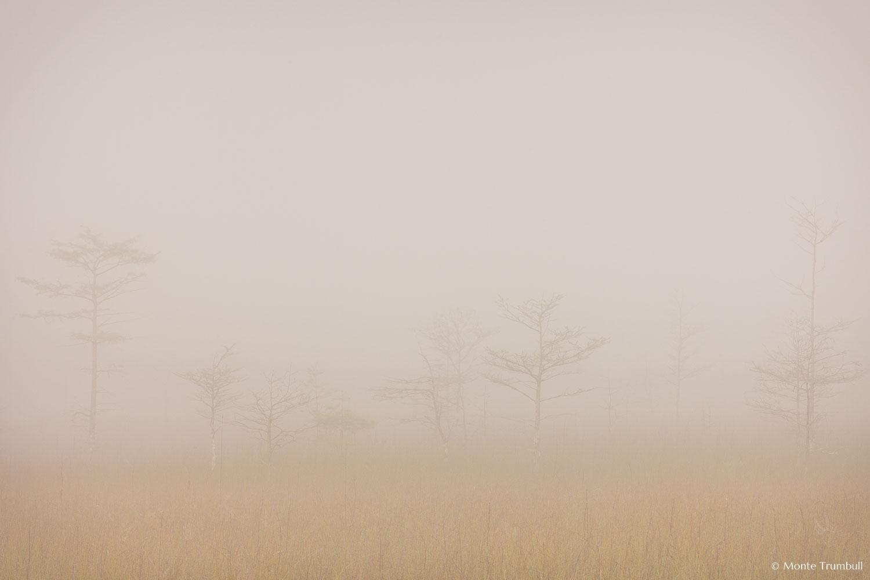 MT-20130224-082711-0097-fog-bald-cypress-everglades-national-park.jpg