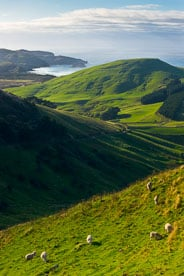 MT-20090412-090319-0080-New-Zealand-South-Island-sheep-green-hills.jpg
