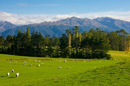 MT-20090414-103750-0054-New-Zealand-South-Island-sheep-mountain-valley.jpg