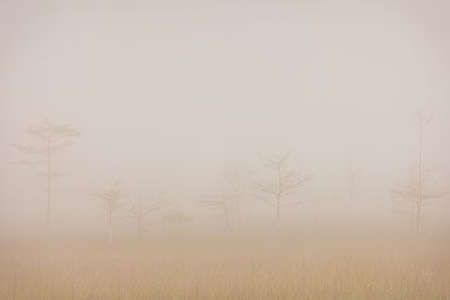 MT-20130224-082711-0097-fog-bald-cypress-everglades-national-park.jpg