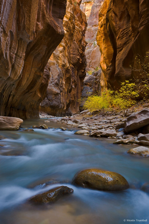 MT-20071104-130557-0020-Utah-Zion-National-Park-Narrows-fall-color.jpg