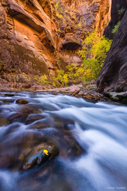 MT-20121106-111741-0001-Utah-Zion-National-Park-Narrows-fall-color-flowing-water.jpg