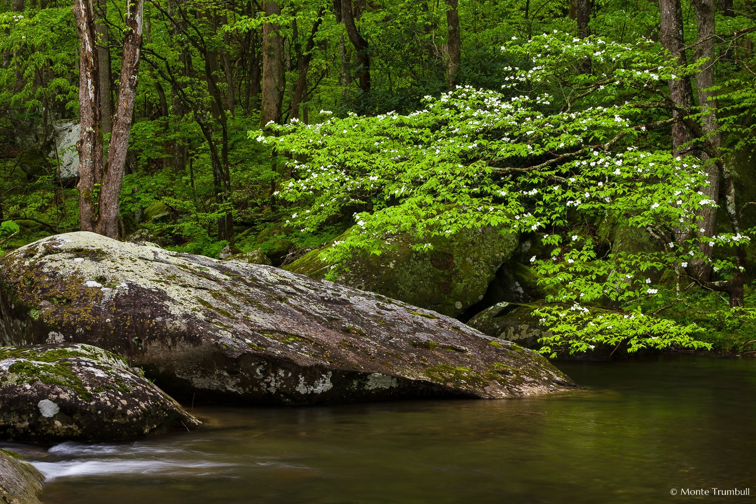 MT-20150426-091804-0028-middle-fork-little-river-dogwood-great-smoky-mountains-national-park.jpg