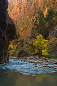 MT-20071104-124529-0016-Edit-Utah-Zion-National-Park-Narrows-fall-color.jpg