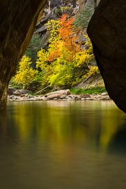 MT-20121108-144209-0069-Utah-Zion-National-Park-Narrows-fall-color-reflection.jpg