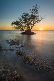 MT-20130221-182015-0067-mangrove-sunset-everglades.jpg