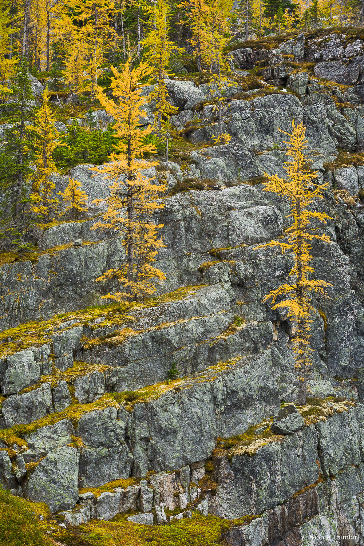MT-20060920-132347-0047-Canada-Yoho-National-Park-golden-larch-rocks.jpg