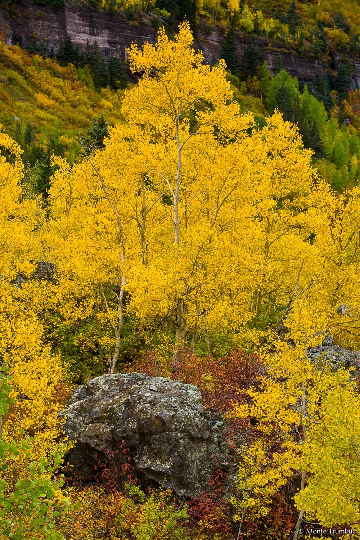 MT-20070929-105841-0056-Edit-Colorado-aspen-rock-fall-color.jpg
