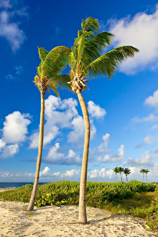MT-20080221-072410-0054-Edit-Anguilla-two-palm-trees.jpg