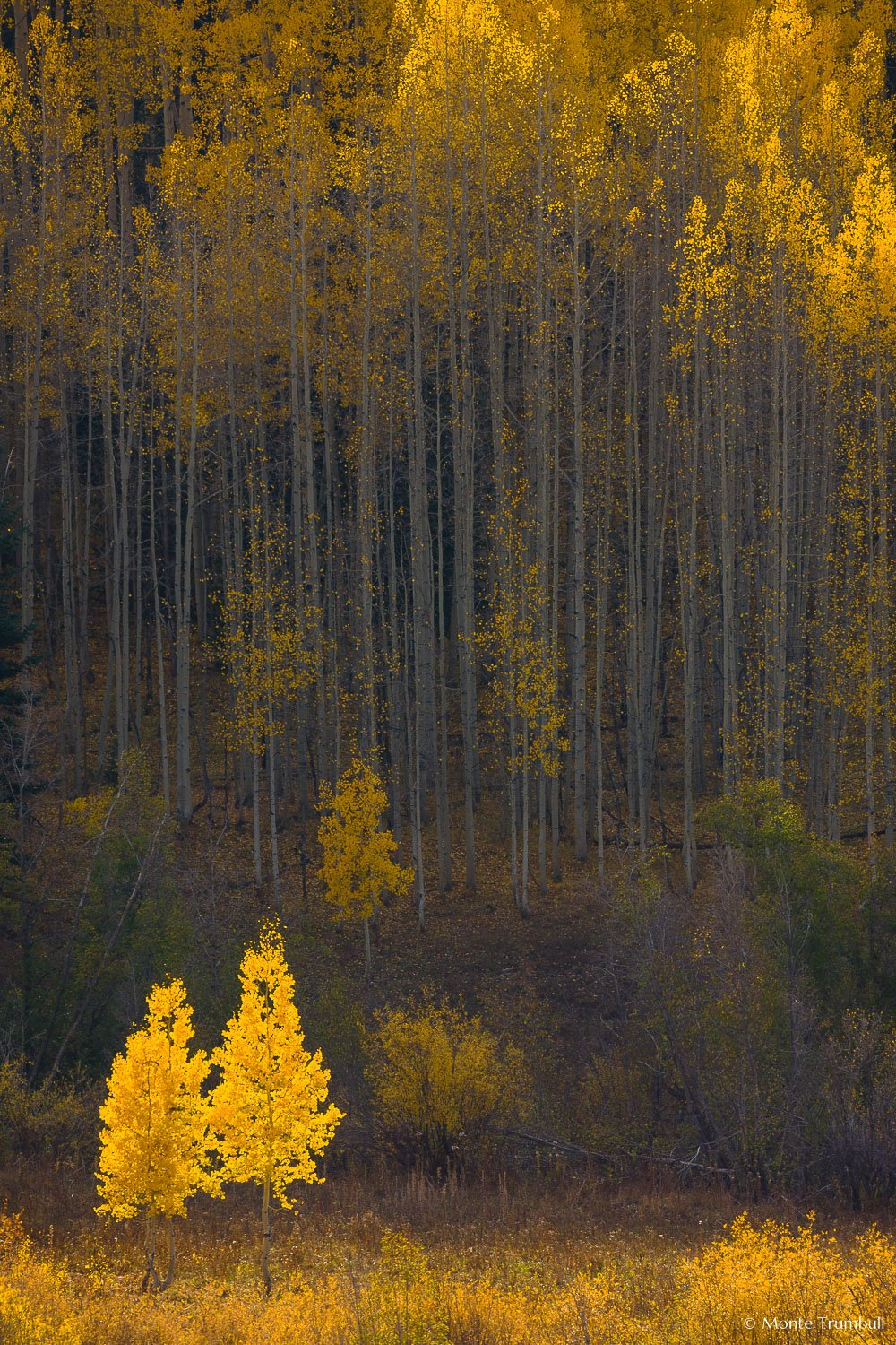 MT-20081001-170344-0124-Colorado-golden-aspens.jpg