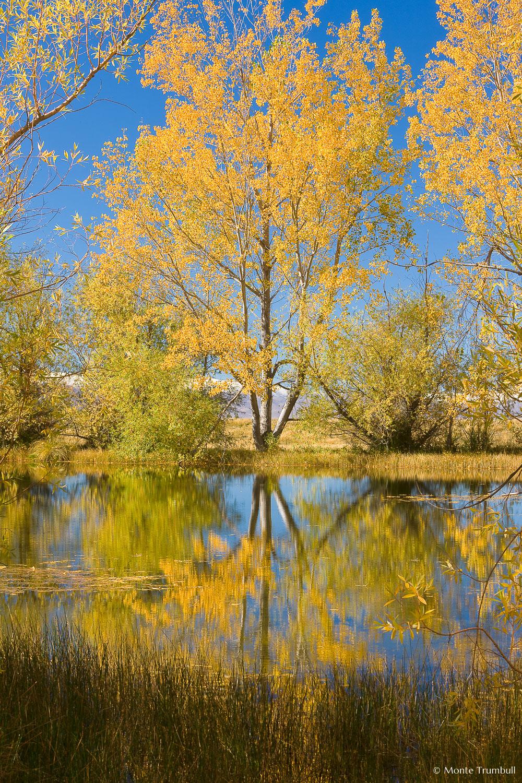 MT-20090410-111334-0038-New-Zealand-South-Island-Twizel-golden-tree.jpg