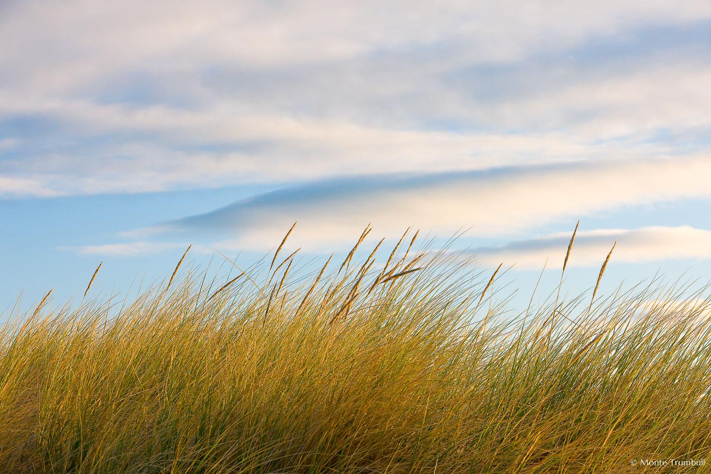 MT-20090414-075622-0039-Edit-New-Zealand-South-Island-Taramea-Bay-grasses.jpg