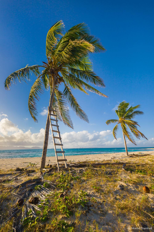 MT-20110212-073556-0107-Anguilla-palm-trees-ladder.jpg