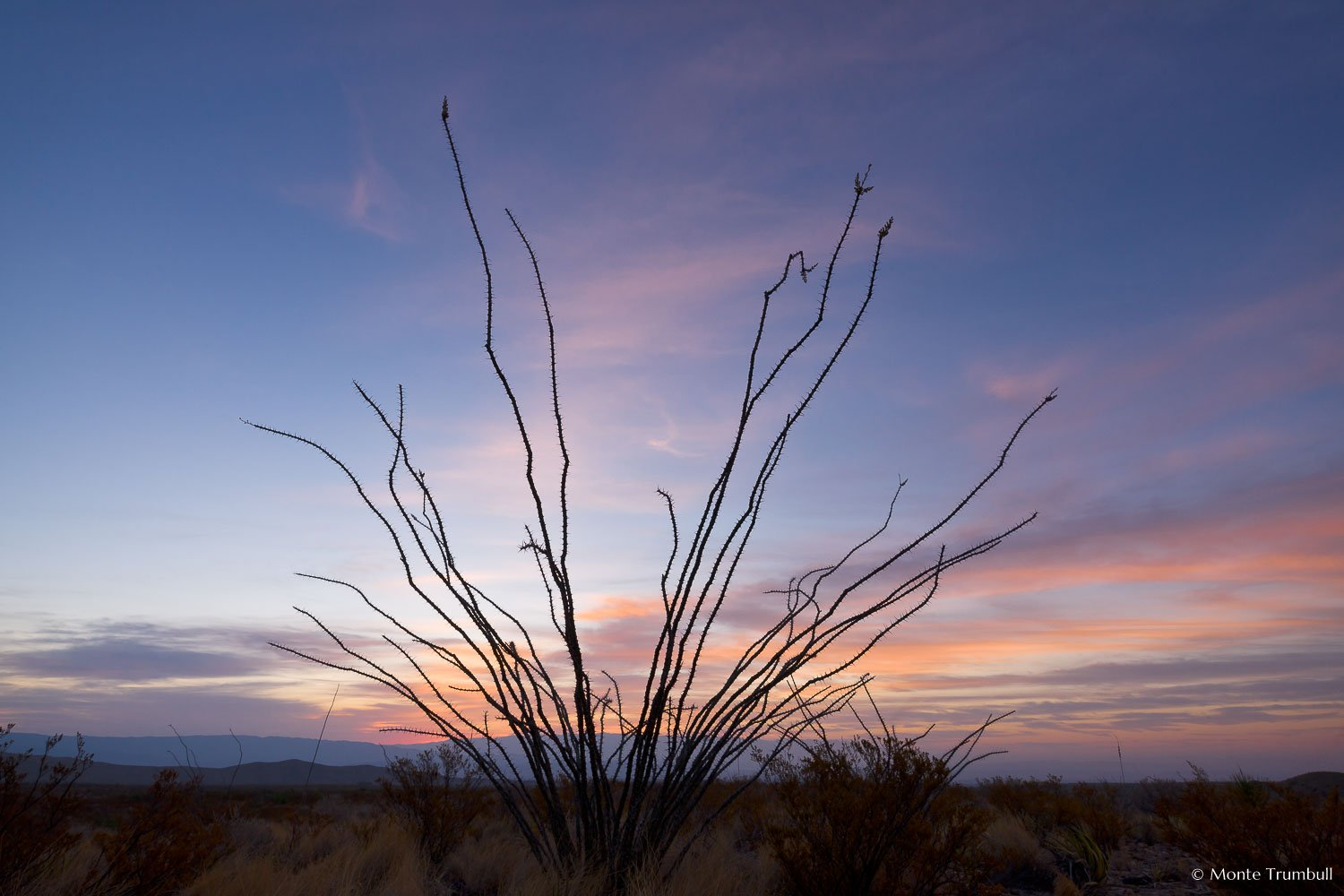 MT-20110320-055136-Texas-Big-Bend-National-Park-ocotillo-silhouette-sunrise.jpg
