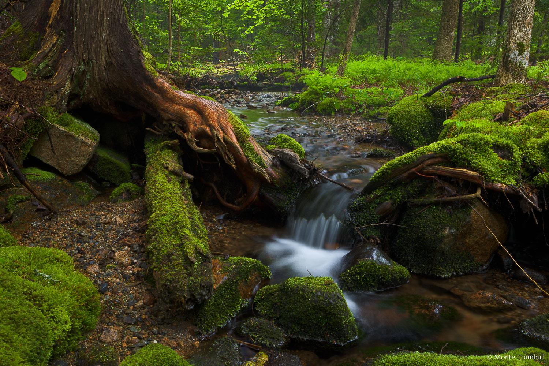 MT-20110609-080839-0007-Maine-Acadia-National-Park-stream-woods.jpg