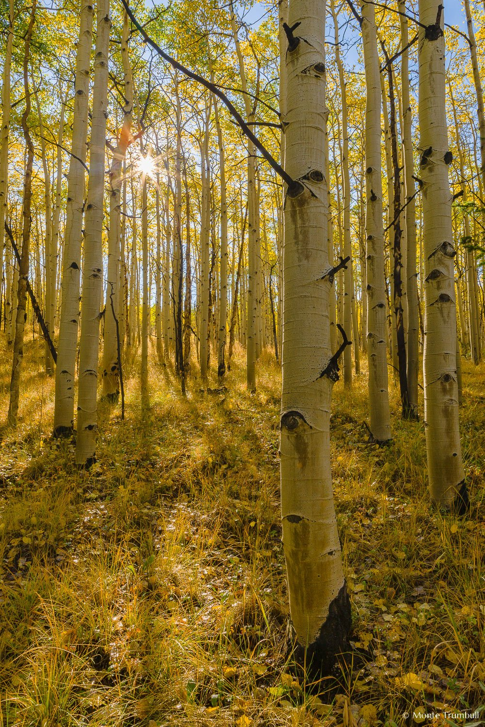 MT-20120913-092039-0001-Colorado-golden-aspens-sunburst.jpg