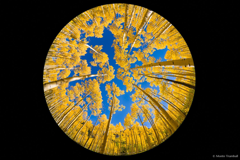 MT-20120914-144232-0001-Edit-Colorado-golden-aspens-fisheye.jpg