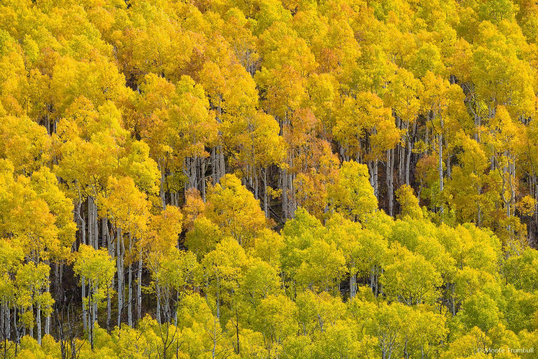 MT-20131008-115804-0045-Colorado-fall-gold-orange-aspens.jpg