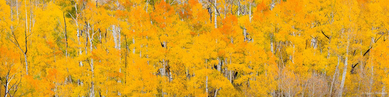 MT-20151005-111824-0093-Pano-Colorado-golden-orange-aspens.jpg