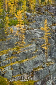 MT-20060920-132347-0047-Canada-Yoho-National-Park-golden-larch-rocks.jpg