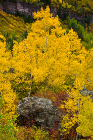 MT-20070929-105841-0056-Edit-Colorado-aspen-rock-fall-color.jpg