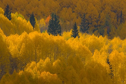 MT-20081001-171725-0136-Edit-Colorado-golden-aspens.jpg