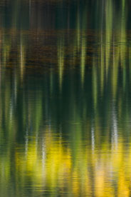 MT-20081008-165133-0106-Colorado-Woods-Lake-reflection-gold-green.jpg