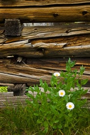 MT-20090725-172125-0020-Colorado-log-cabin-wildflowers.jpg