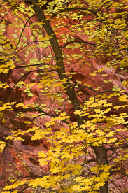 MT-20101107-123435-Utah-Spring-Creek-Canyon-fall-color-red-rock.jpg