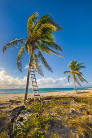 MT-20110212-073556-0107-Anguilla-palm-trees-ladder.jpg