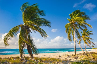 MT-20110212-074056-0108-Anguilla-palm-trees-on-beach.jpg
