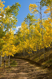 MT-20111005-105816-0088-Colorado-Buena-Vista-golden-aspen-trees-blue-sky-road.jpg