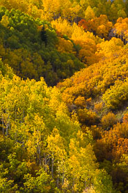 MT-20131003-153046-0227-Oak-Creek-Colorado-aspens-fall-color.jpg