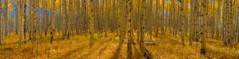MT-20150924-103711-0020-Pano-Colorado-autumn-aspen-golden.jpg