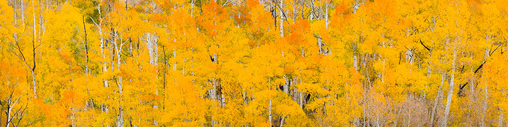 MT-20151005-111824-0093-Pano-Colorado-golden-orange-aspens.jpg