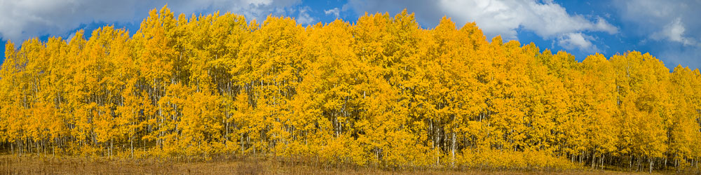 MT-20171005-161513-0045-Pano-Golden-Aspens-Gunnison-National-Forest-Colorado.jpg