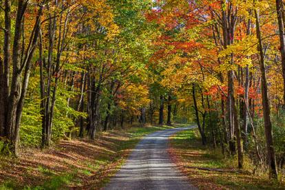 MT-20171021-092849-0001-Autumn-Maples-Road-Watkins-Glen-New-York.jpg
