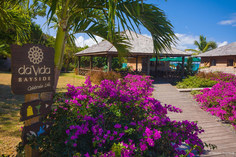 MT-20110212-111618-0150-Anguilla-Lower-Crocus-Bay-DaVida-flowers.jpg