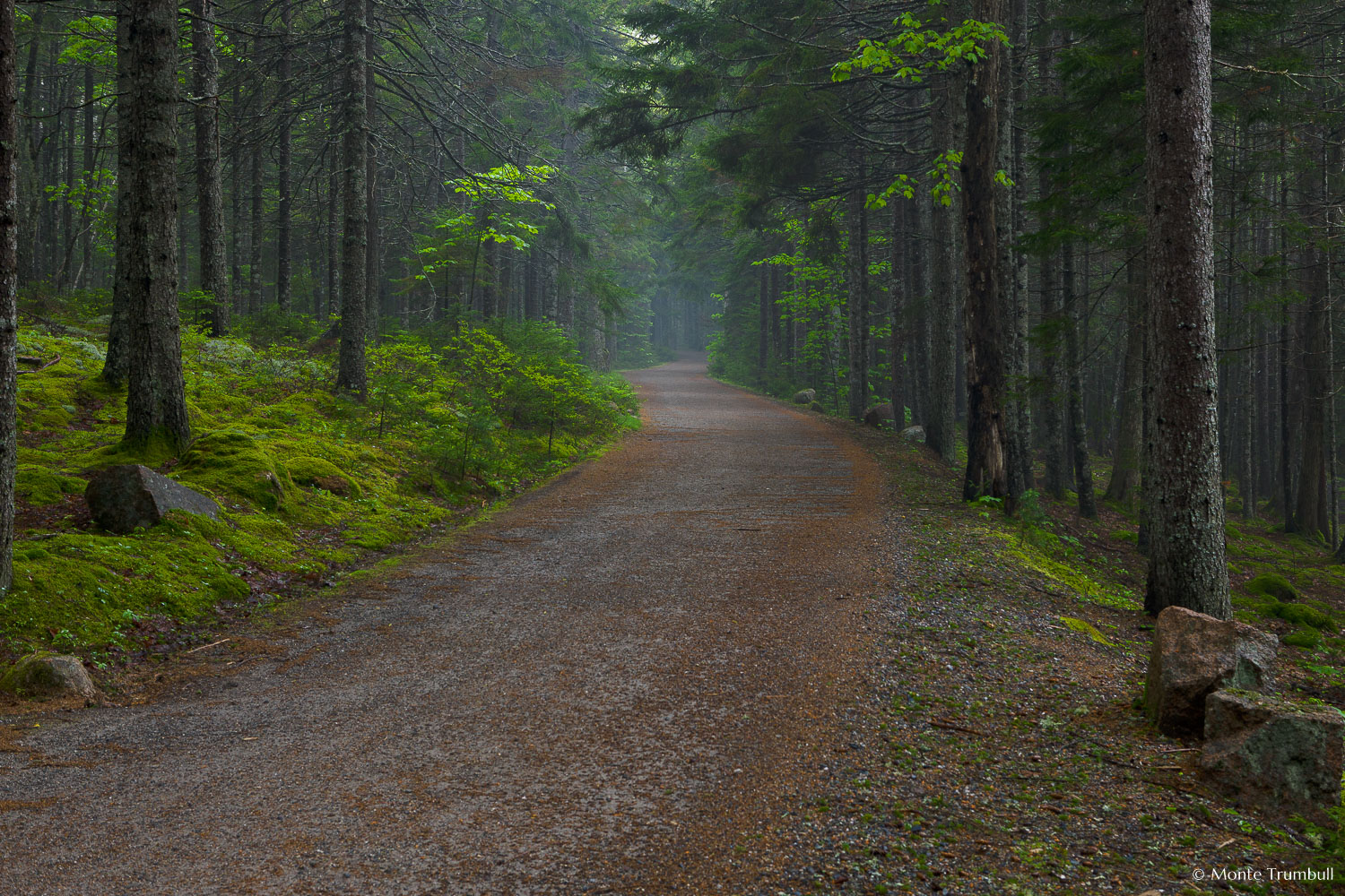 MT-20110609-074436-0005-Maine-Acadia-National-Park-carriage-road-mist.jpg