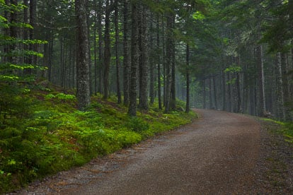 MT-20110609-074259-0004-Maine-Acadia-National-Park-carriage-road-mist.jpg