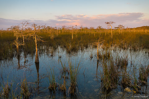 Sunset casts a warm glow over a slough filled with dwarf cypress trees in Everglades National Park, Florida.