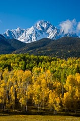 Snow-capped Mount Sneffels rises behind a grove of changing aspen trees outside of Ridgway, Clorado.