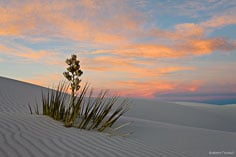 The setting sun turns the clouds pastel colors behind a lone yucca at White Sands National Monument in New Mexico.